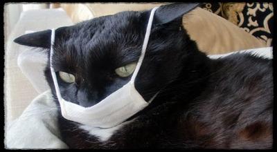 Болеют ли кошки бешенством?
