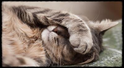 Болеют ли коты и кошки гриппом