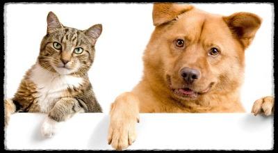Какие собаки уживаются с кошками в одном доме