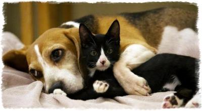 Какие собаки живут с котами мирно