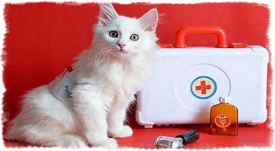 Почему коты болеют гриппом