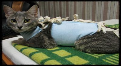 Сколько дней кошка болеет после стерилизации