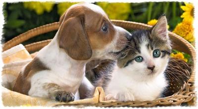 Собаки, находящие общий язык с кошками