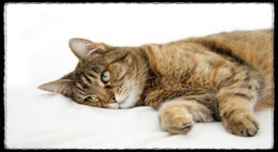 болеют ли кошки чумкой