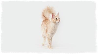 что делать чтобы кот не метил территорию