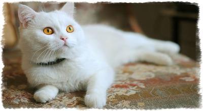 восстановление кошки после стерилизации