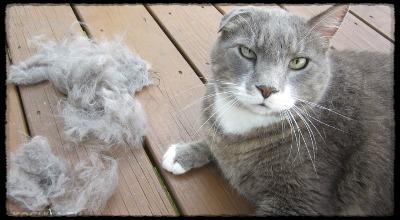 выпадает шерсть у кота что делать