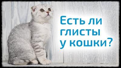 Что дать кошке от глистов