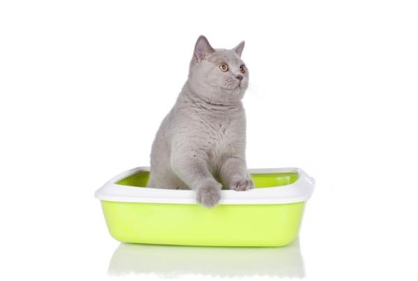 Что дать кошке от запора - виды слабительных препаратов