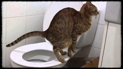 Что дать кошке от запора