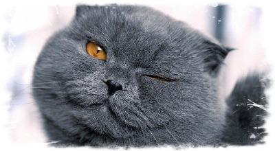 Что делать, если у кота опух глаз