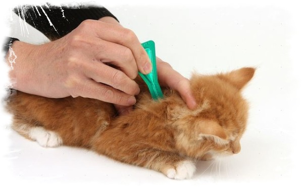 Что можно дать кошке от глистов