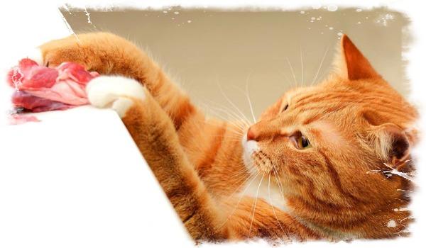 Какие продукты давать коту от запора