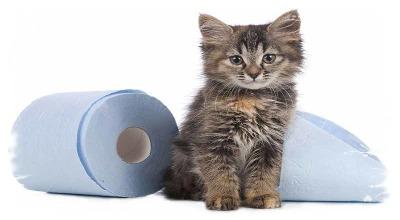 Острый приступ диареи у котов