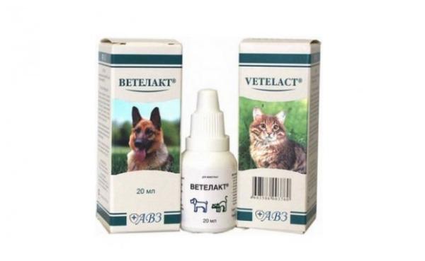 Профилактика запора у кошек Ветелакт