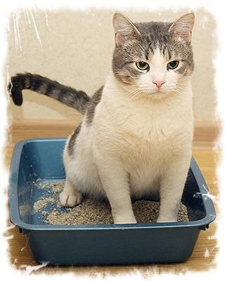 болезни вызывающие понос у котов