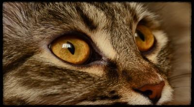 что делать если у кота опух глаз