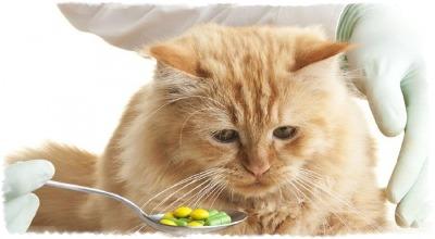 лекарство от поноса для кошек