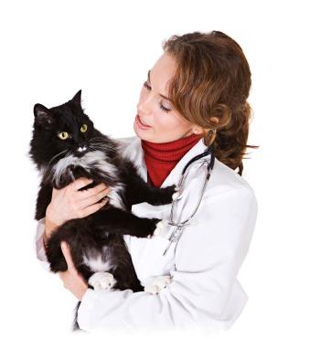 помощь ветеринара коту