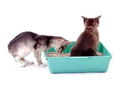прокинетики от запора кошки