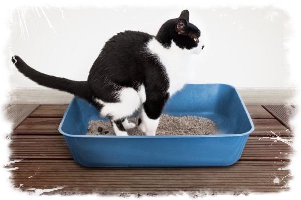 симптомы запора у кошки