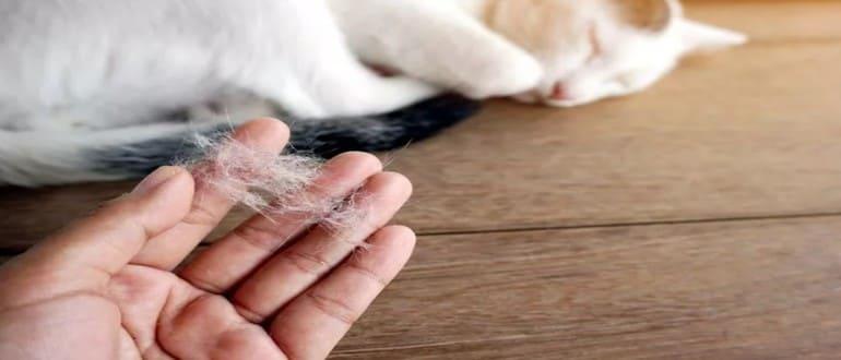 Выпадение шерсти у кошки