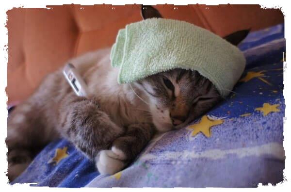 Симптомы и признаки пневмонииу кошек