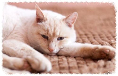 Виды пневмонииу кошек