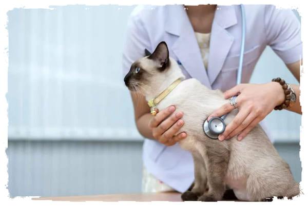 хронический бронхит у кошки