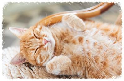 профилактика давления у кошек