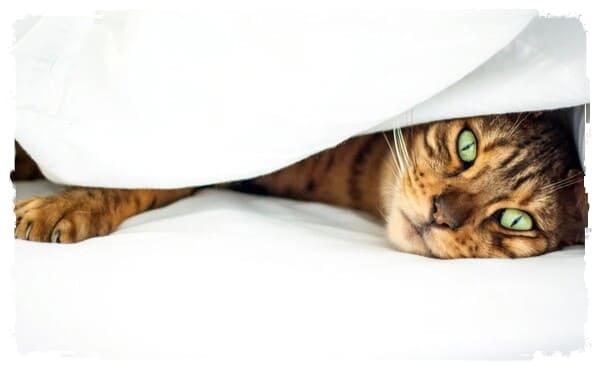 профилактика пневмонии у кошек