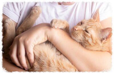 профилактика соплей у кошки