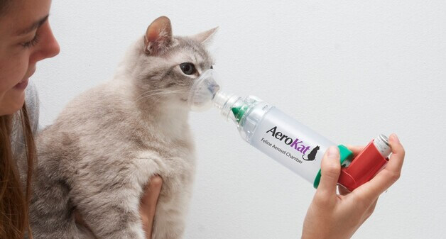 Ингалятор при астме у кошек