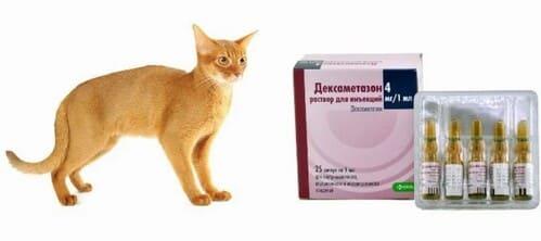 Дексаметазон при аллергии у кошки