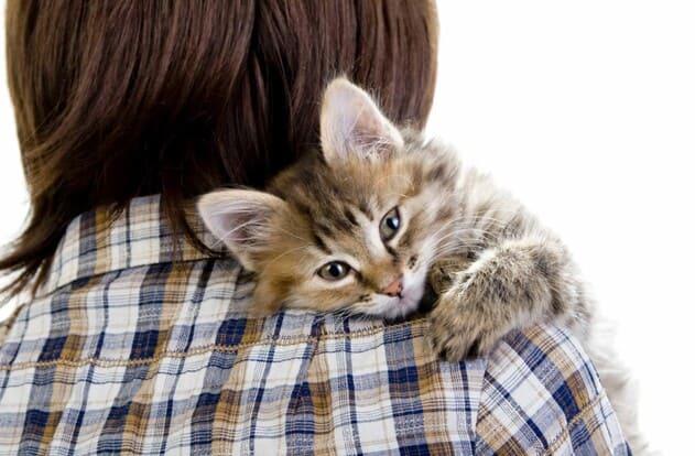 Лишай от кошки у человека