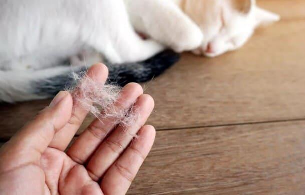 У кошки аллергия на шерсть