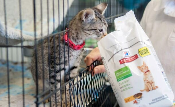 аллергия на корм у кошки